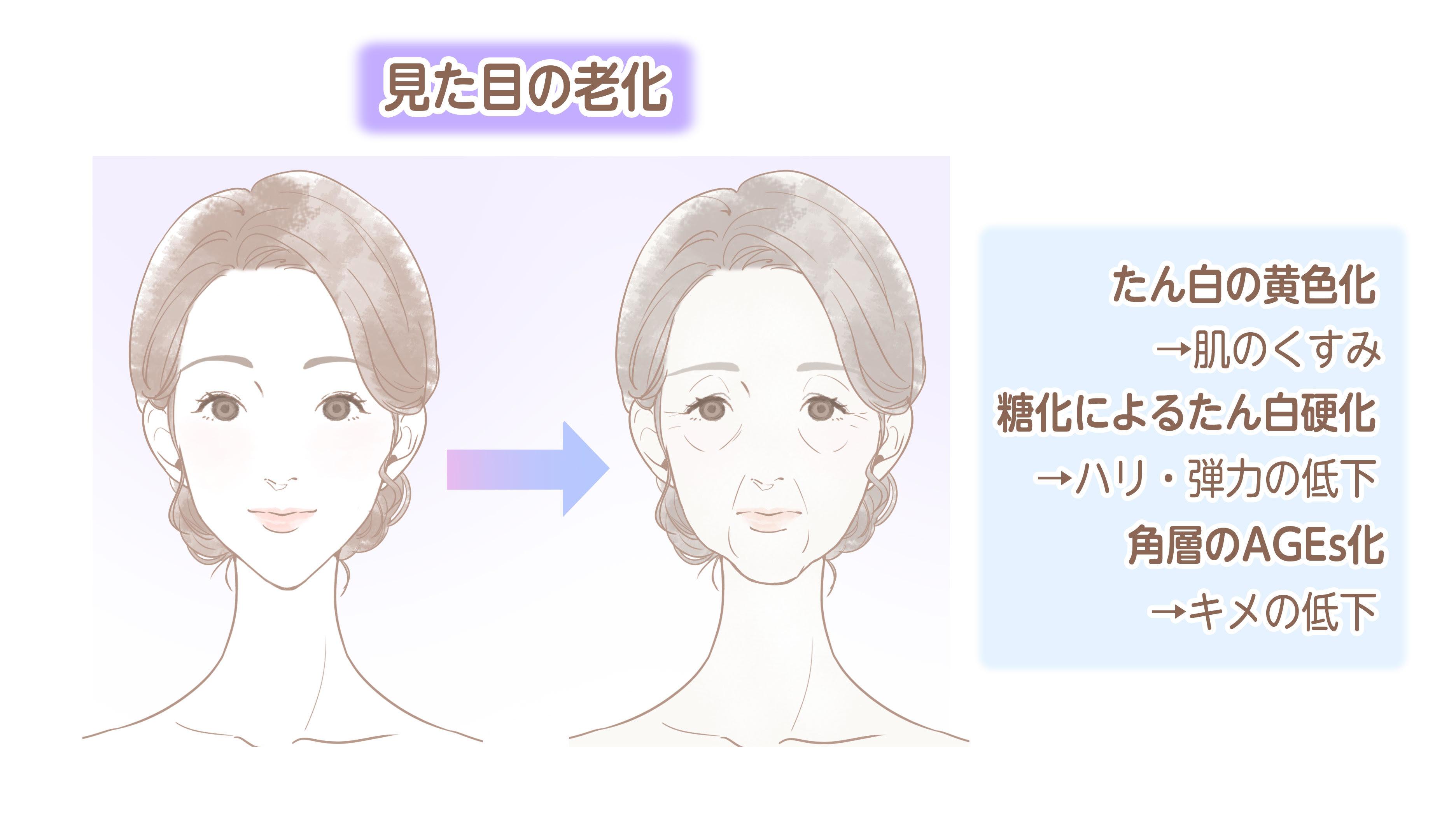 顔の老化.jpg